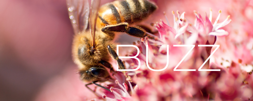 Bee on pink flowers with the word buzz